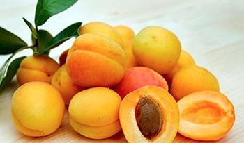 косточки абрикоса польза, apricot bones use