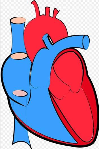 аритмия сердца лечение народными средствами